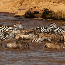 River-crossing,-Kenya