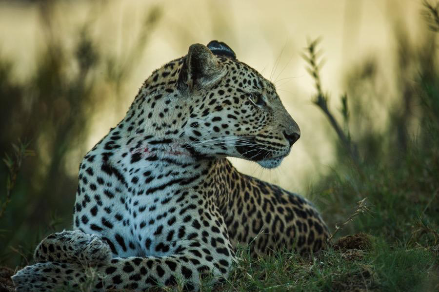 Best of Botswana & Victoria Falls Wildlife Safari