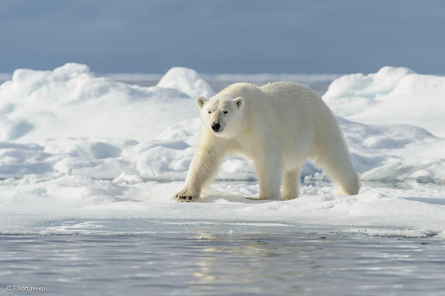 Spitsbergen - Explorer 2021
