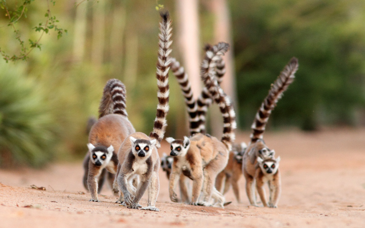 madagascar wildlife tour