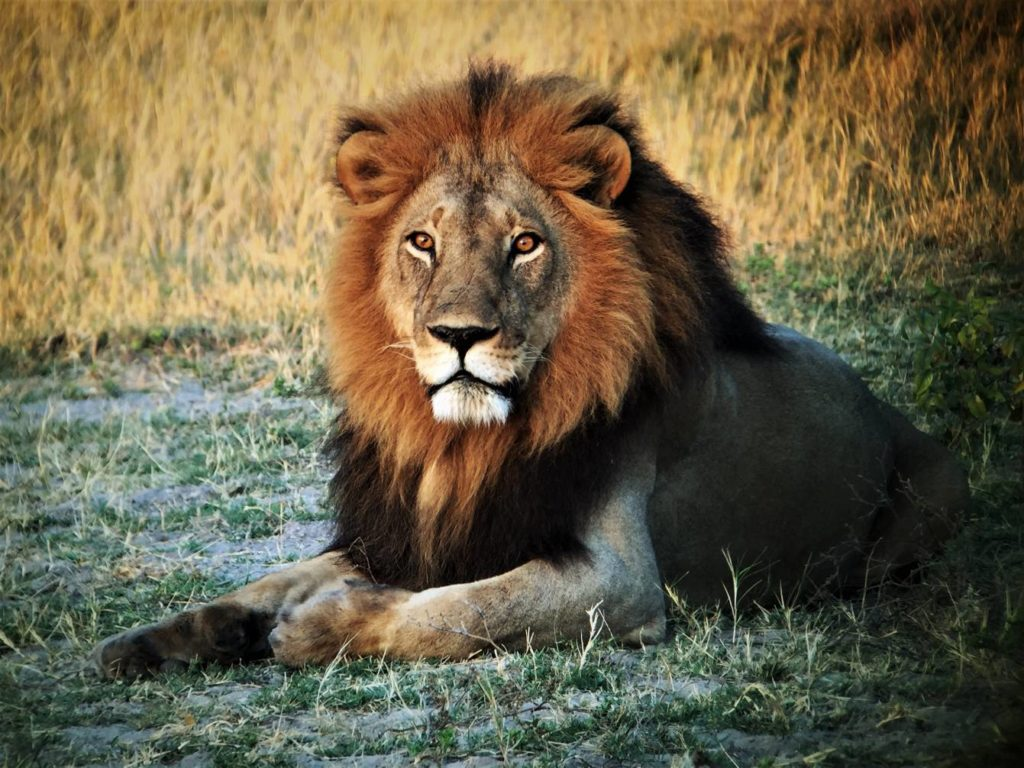botswana wildlife tour