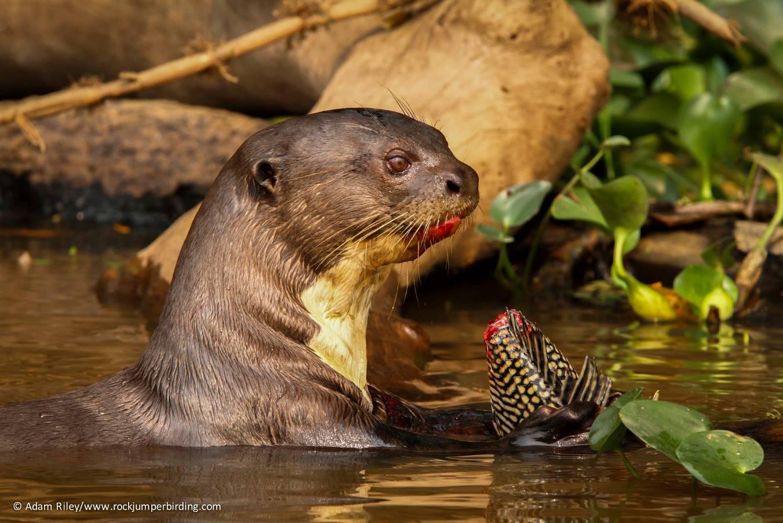 brazil wildlife tours