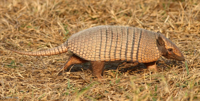 brazil wildlife tour