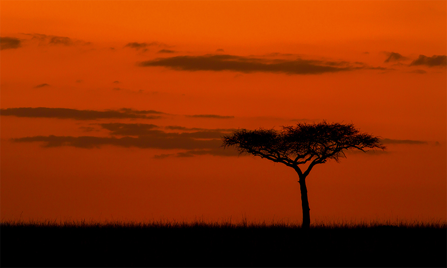 kenya wildlife tours