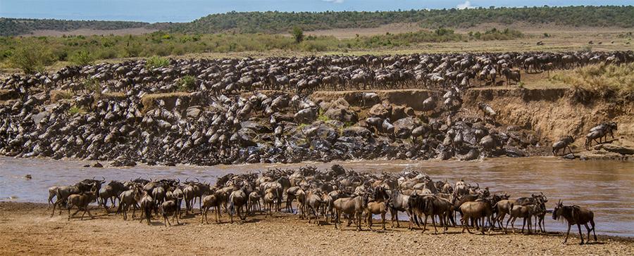 kenya wildlife tours