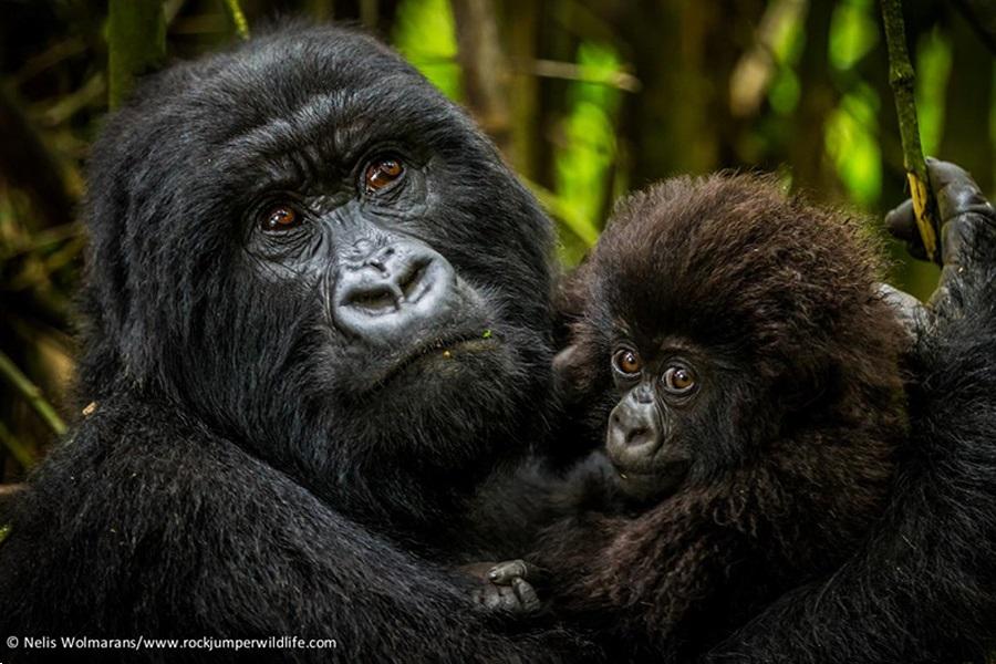 rwanda-thumb