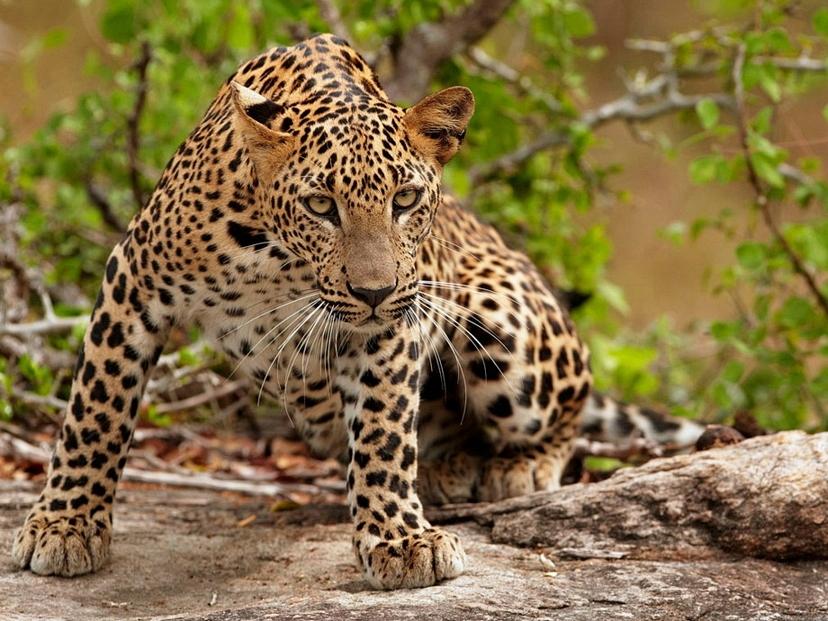 Sri Lanka Wildlife & Culture of Ceylon 2020